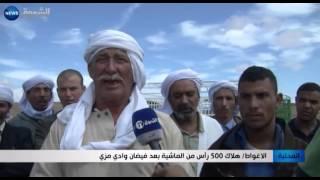 الأغواط: هلاك 500 راس من الماشية بعد فيضان وادي مزي