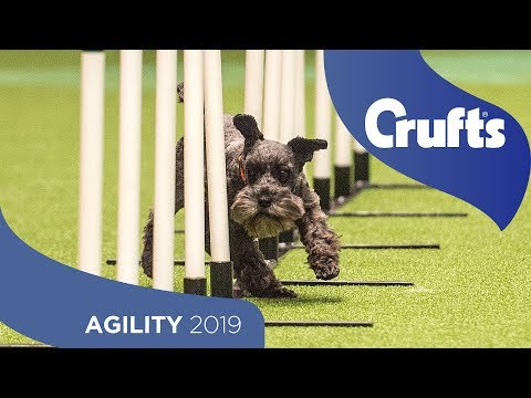 Agility - Crufts Team Small Final - Part 2 | Crufts 2019