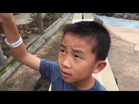 SeaLife Park Hawaii (bonus footage)