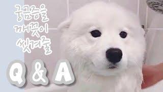 개인소장 영상들 대 방출! 모카우유 Q&A (사모예드 털빠짐, 캐나다 반려동물 문화, etc.)