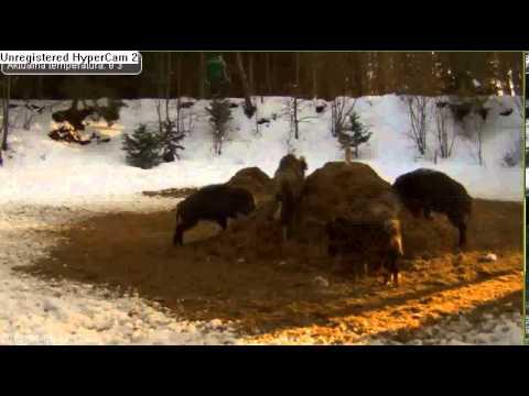 Polskie wpadki #1 von YouTube · HD · Dauer:  7 Minuten 16 Sekunden  · 5,936,000+ Aufrufe · hochgeladen am 4/15/2013 · hochgeladen von Szczery Jerry