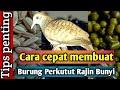 Cara Cepat Membuat Burung Perkutut Rajin Bunyi  Mp3 - Mp4 Download