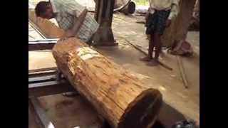 Ebony log cutting in  India