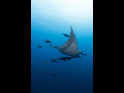 2017 Mexiko , 3 weeks of diving in Yucatan and Socorro