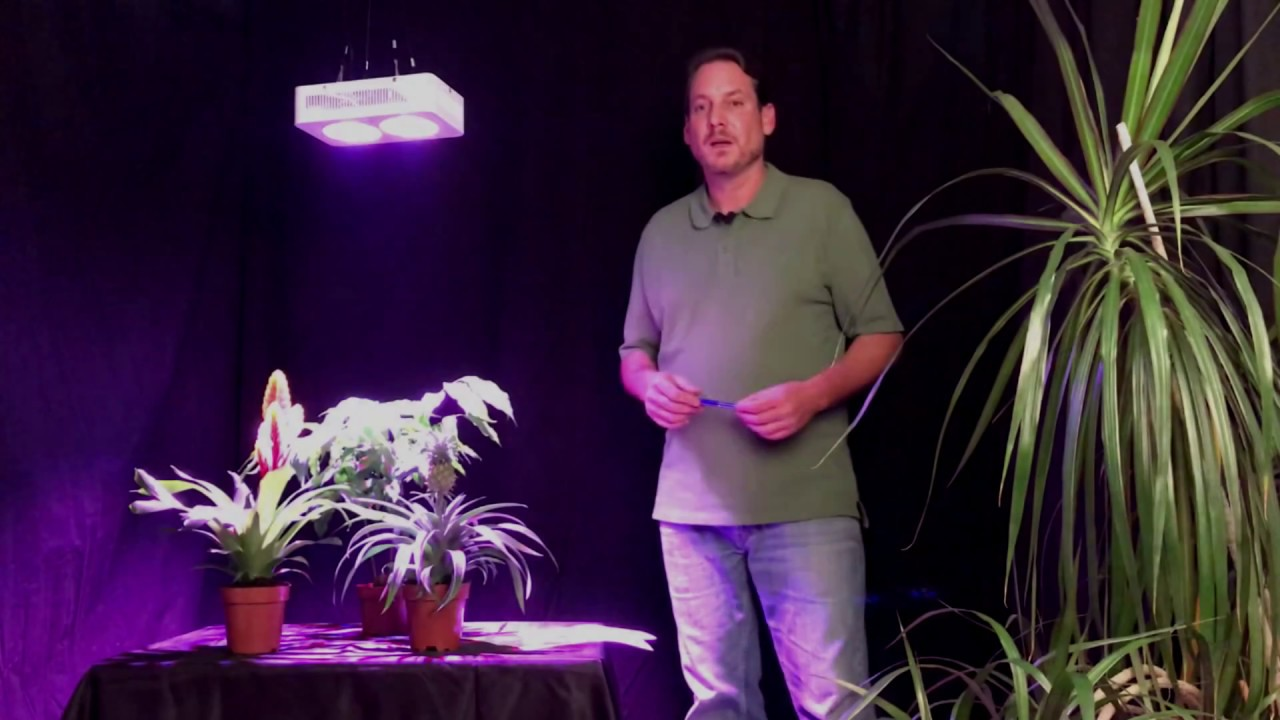 LED Pflanzenlampen - Fragen und Antworten zur