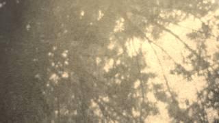 Wordless in Woods Tara Jane ONeil [official]
