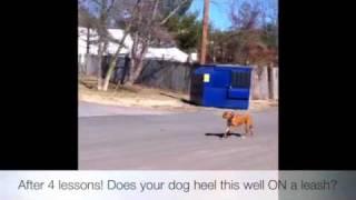 Harley's 4th Lesson! Off-leash K9 Training! Va, Dc, Md