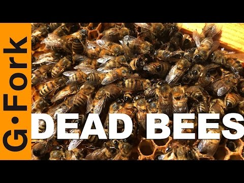 My Bees Are Dead, Here