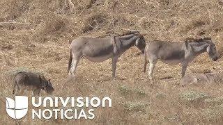 ofrecen-recompensa-para-hallar-a-los-responsables-de-matar-a-ms-de-40-burros-salvajes-en-california