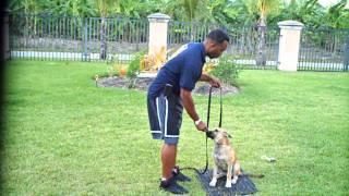 Miami K9 Training ,dog Training With K9 Enforcement  Rick Lherisson Obedience