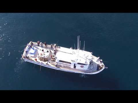 Pacific Islander Sportfishing - Channel Islands, CA