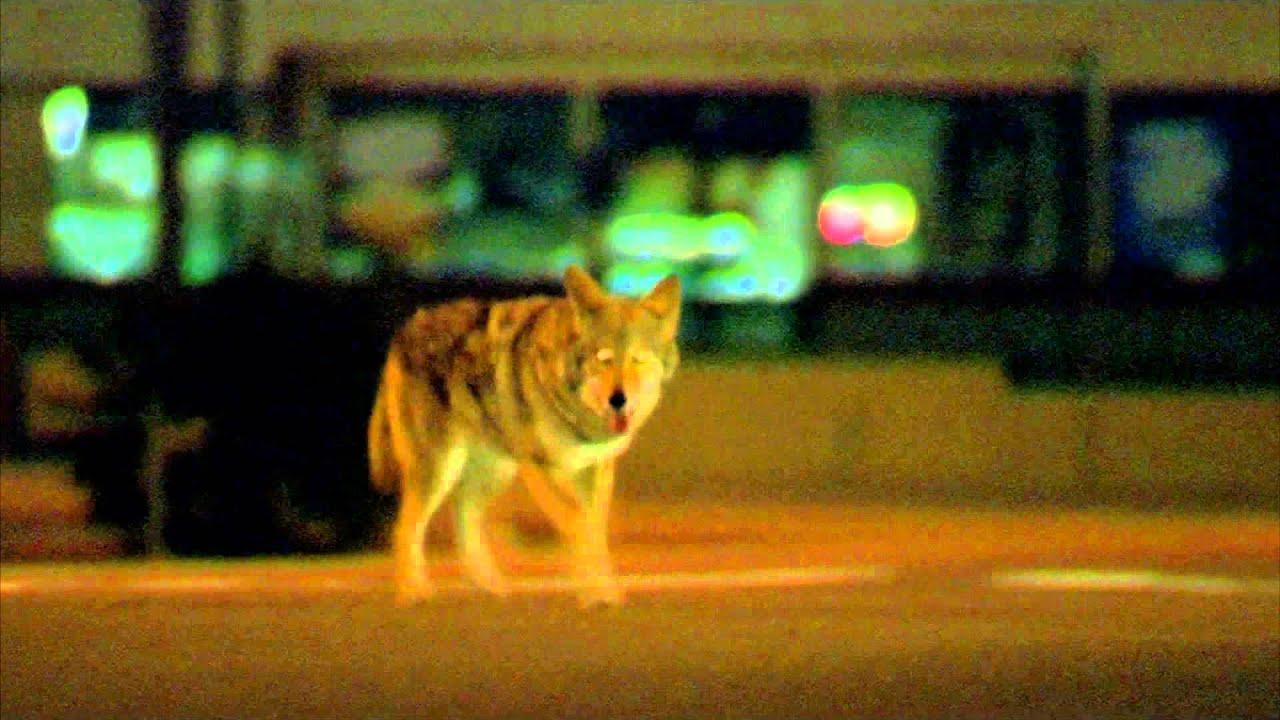 Collateral 2004 Coyote Scene 1080p Youtube