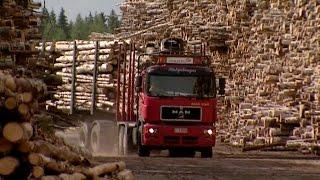 Schulfilm: 360° - die GEO-Reportage - Die Waldfabrik (DVD / Vorschau)