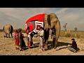 гедике на слонах в индии