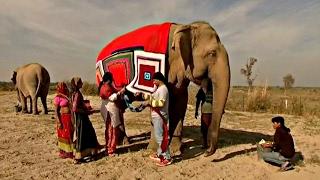 Индия: слонов утепляют свитерами (новости)