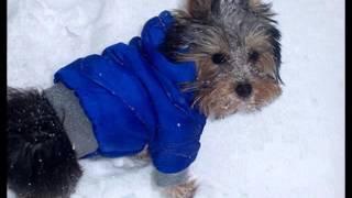 купить одежду для собак в могилеве