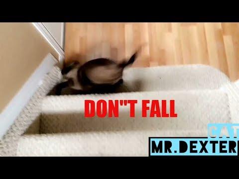 CAT FAIL (cat falls down stairs - he's okay)