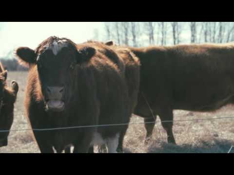 Winter Grazing Systems: Feed Quality in Stockpiled Grazing