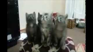 Cats dancing to a Tamil superhit Song