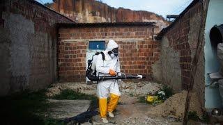 3 deaths linked to Zika virus