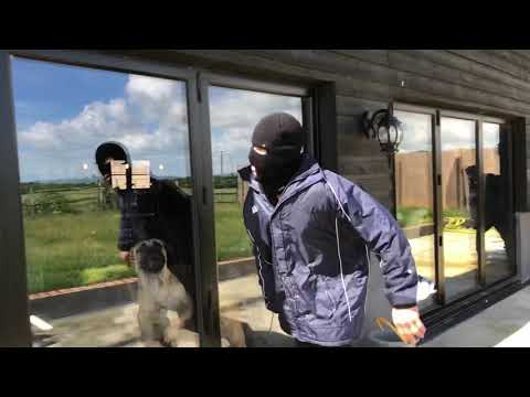 BOERBOEL & RHODESIAN RIDGE BACK RESIDENTIAL HOME INVASION PERSONAL PROTECTION TRAINING