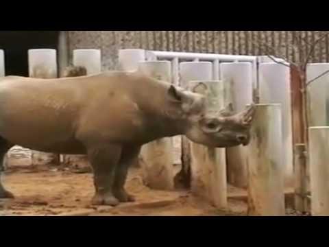 International ANIMAL WELFARE DAY December 10