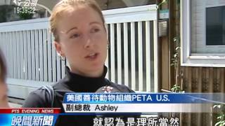 美動保團體臥底調查 控台灣賽鴿涉虐 20140617 公視晚間