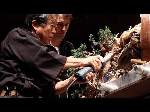 Kunio Kobayashi creates a Juniper Bonsai