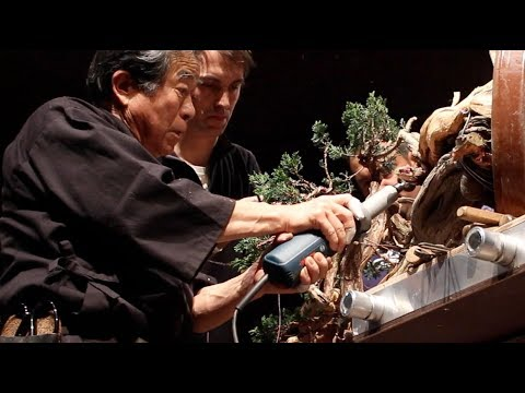 Kunio Kobayashi creates a Juniper Bonsai