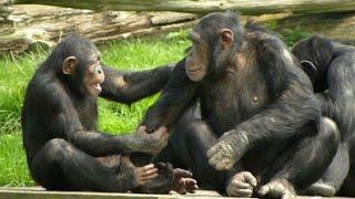 🐵The funniest monkey videos🐒