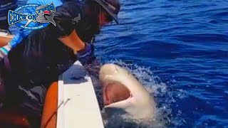 Most Amazing Fishing Videos Ever Must Watch - Great White Shark Cage Breach Accident Like - Shark(Most Amazing Fishing Videos Ever Must Watch - Great White Shark Cage Breach Accident Like - Shark Most Amazing Fishing Videos Ever Must Watch - Great ..., 2016-10-07T13:00:00.000Z)