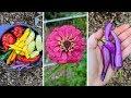 September Garden Harvest! SO Many Peppers! | Rare and Heirloom Varieties!