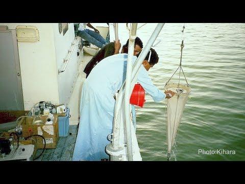 Sustainable fish resource management