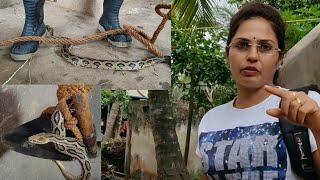 || भारत के सबसे जहरीले साँपोंमेसे एक साँप : घोनस (Russell's Viper) || देखे कुवेसे कैसे इसे निकाला ||