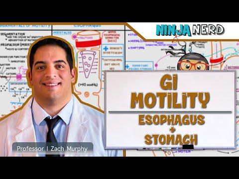 Gastrointestinal   GI Motility of the Esophagus & Stomach