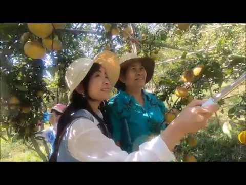 Orange Farming part 2 - Thailand travel
