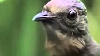 Funny Bird Documentary