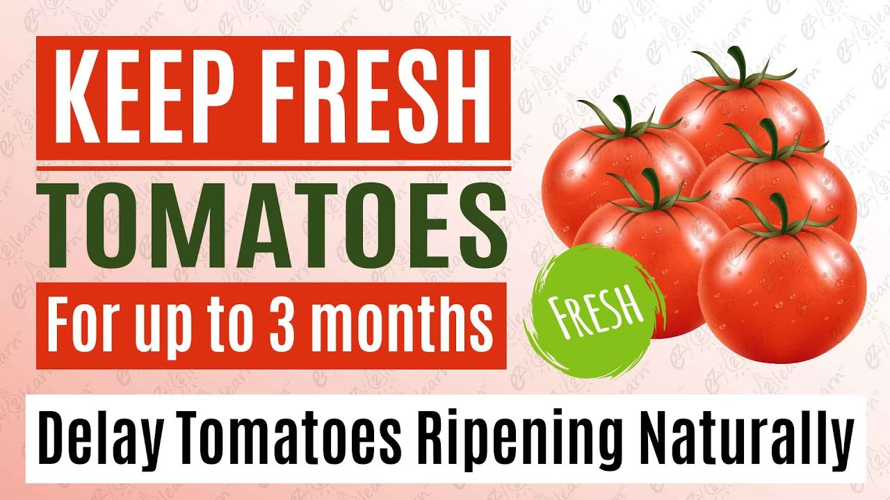 Best way to keep Tomatoes Fresh for a long time without freezing - Delay Tomato Ripening Naturally