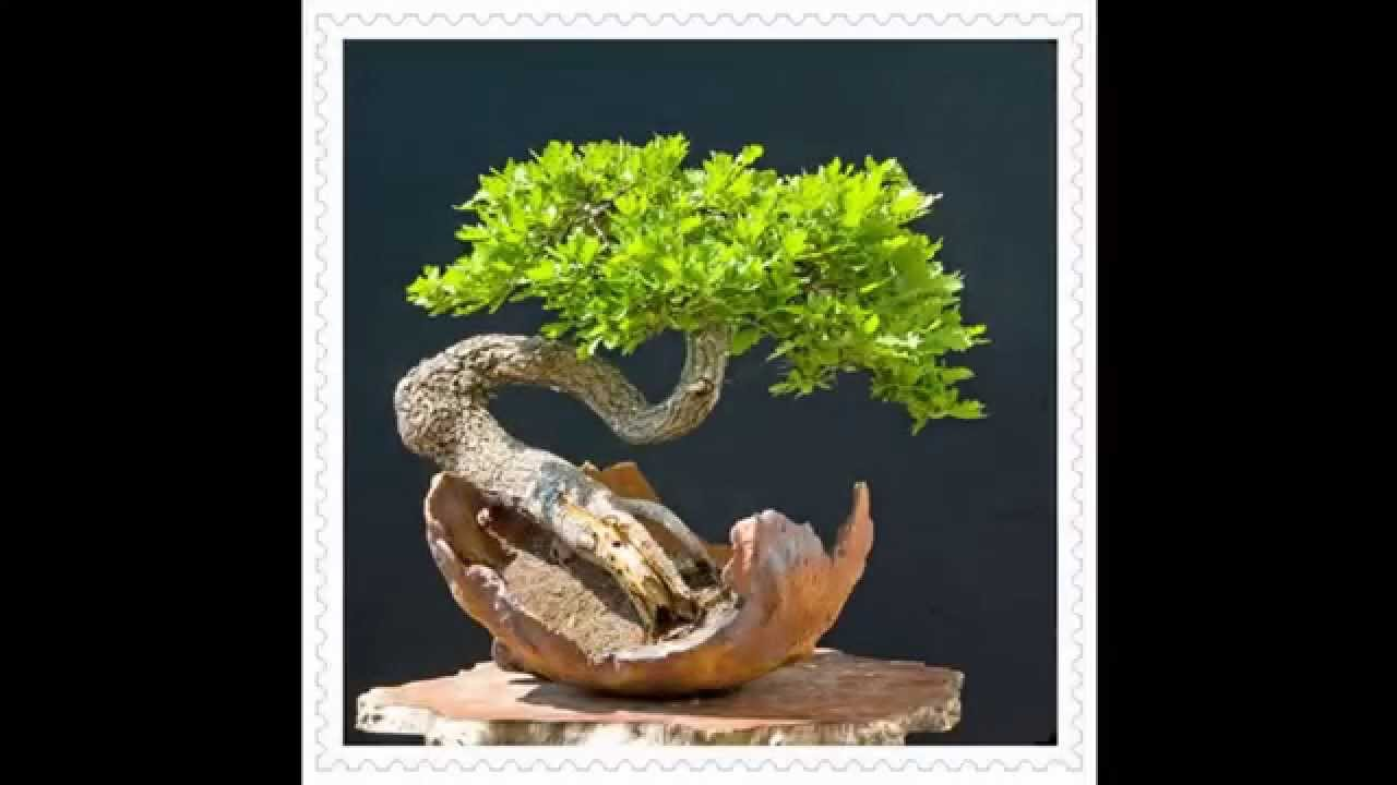 How to Grow Bonsai Tree - Bonsai for Beginners