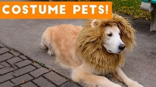 Try Not To Laugh At These Funny Pets In Costumes Video Compilation