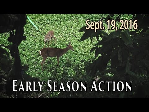 Early Season Bowhunting - Patterning Bucks | Midwest Whitetail