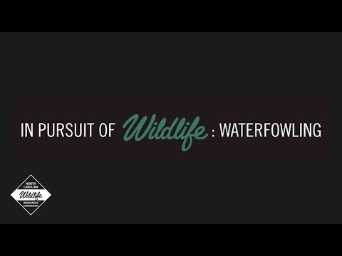 In Pursuit Of Wildlife: Waterfowling