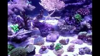 Морской аквариум. Жесткий риф 450 литров(Морской аквариум waterbox (на заказ). Оформление жесткий риф., 2011-12-09T10:52:02.000Z)