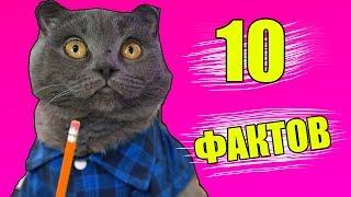 10 ФАКТОВ О КОШЕЧКЕ БАТТЕРС