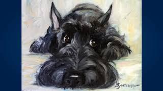 Скотч терьер (Scottish Terrier)
