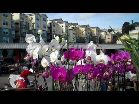 Purple and White Flowers, Alemany Fair, San Francisco, California USA.MP4