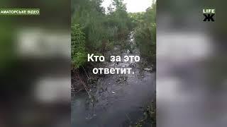 Нечистоти з каналізації Озерного потрапляють у річку