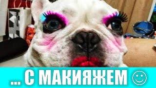 Животные с макияжем :)