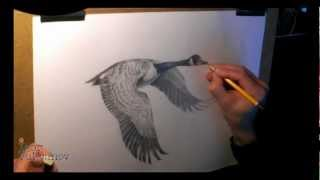 Wild Goose Drawing