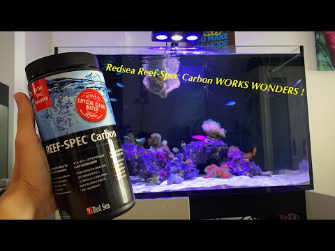 Yellow Water In Fish Tank ? Watch This Now !